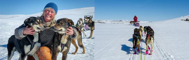 Hundesledetur på Hardangervidda, Norge